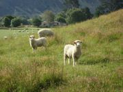 mover_new-zealand